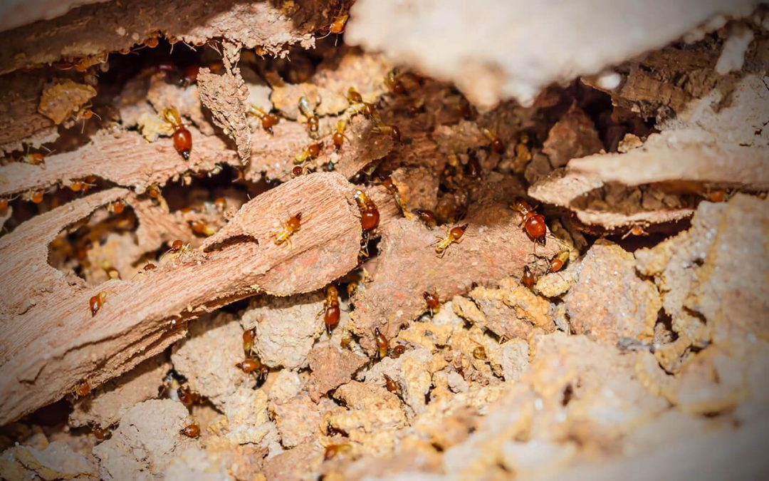 4 Signs of Termites in Your Home